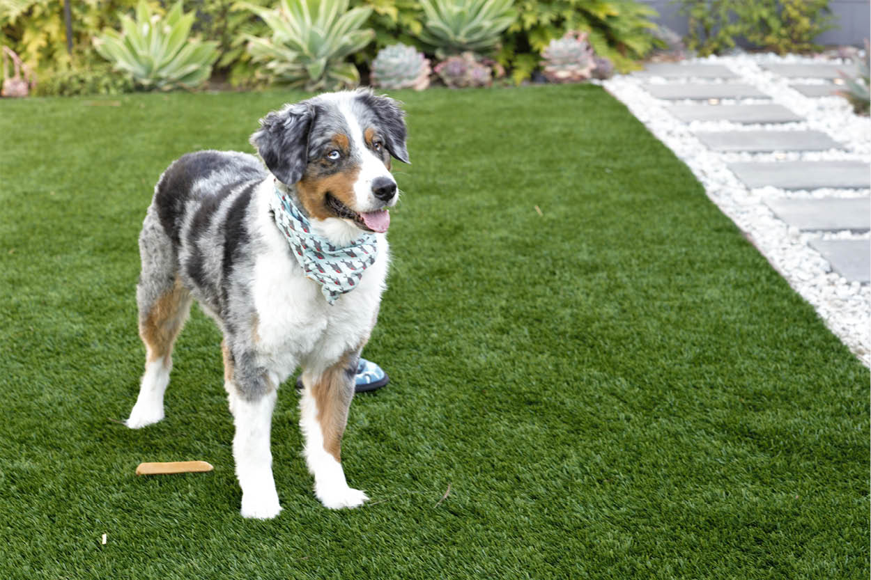 Artificial turf for dogs. Why and Where to Use it