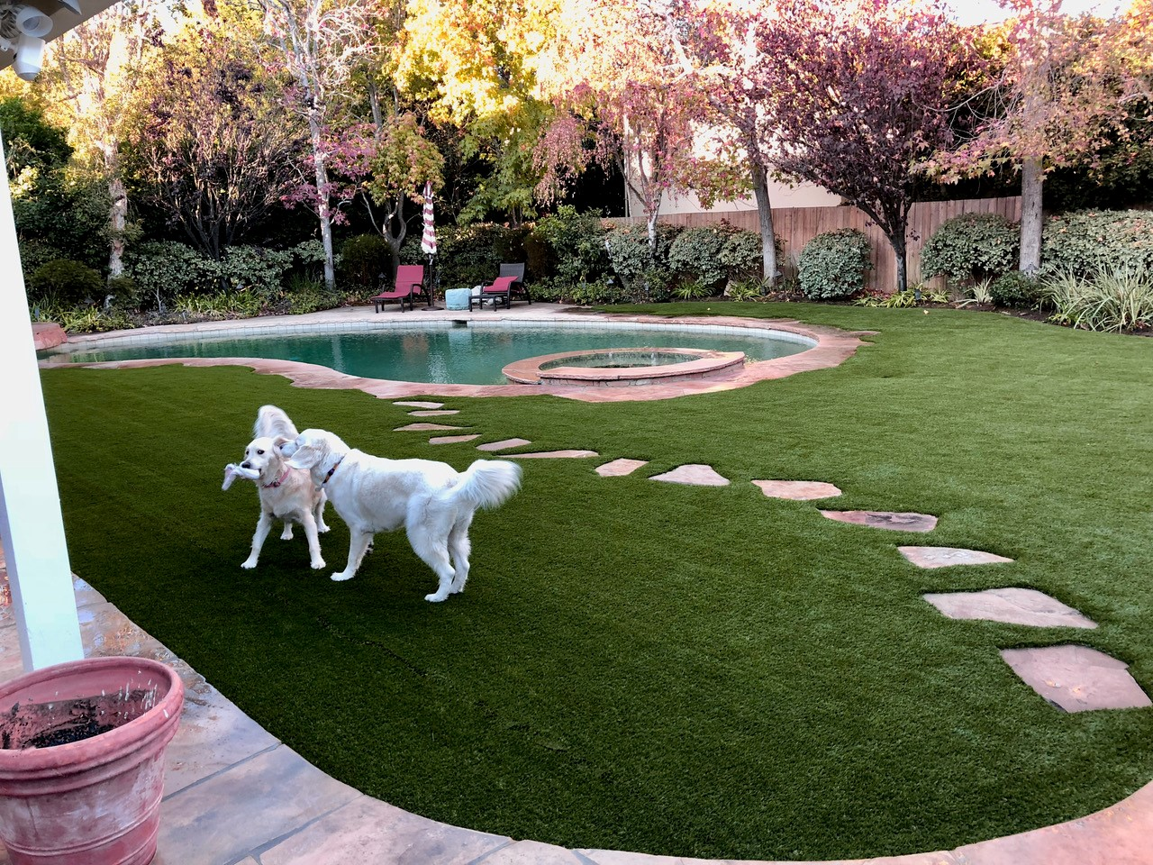 Dog on artificial turf by pool