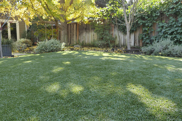Synthetic Grass Landscaping