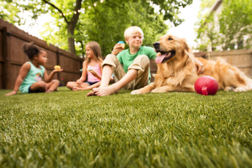 Artificial grass that's safe for kids.