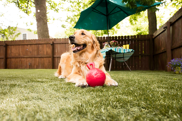 Neutralizing dog urine odors in artificial grass with Envirofill