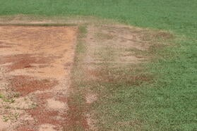 Natural Basepath surrounded by turf